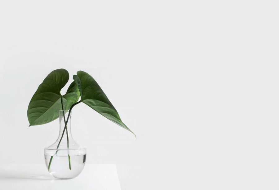 Two green leafs in a glass vase on a white background